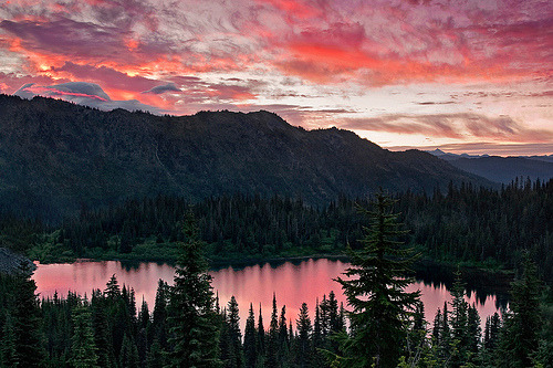 woodendreams:  (by Light of the Wild)