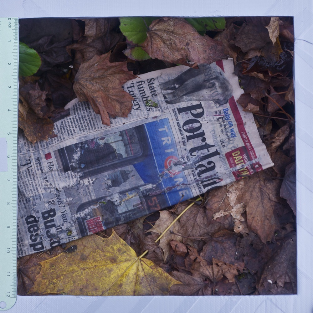Copy of the Portland Tribune newspaper with leaves, litter, N Lombard/Lovely alley.