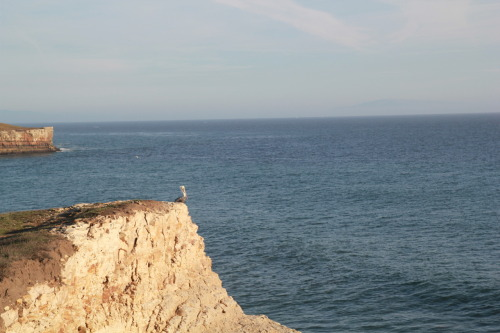 I spied a solitary pelican (I think) along a coastal hike last weekend. I've never seen them dive for fish, but I'm curious how they see their prey through the water. Do all birds have 'hawk-eyes'? Meghan, science writer, 29, Santa Cruz
