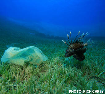 Plastic is the world's biggest ecological problem that most people don't know/care about. Do your part to eliminate and recycle as much plastic as you can. The several Garbage Patches that exist in all our oceans continue to grow bigger and bigger killing millions of innocent birds, fish, and other aquatic life.  For more information on these issues visit: http://5gyres.org/