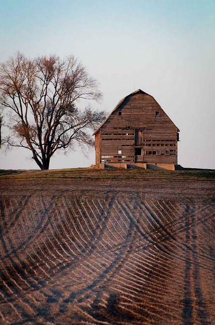 _DSC5803 Old Barn and Corduroy Fields — how many 11-11-11's can you count? by Sally Van Natta on Flickr.