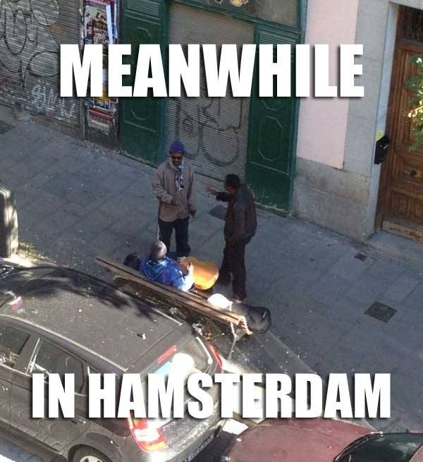 Meanwhile in Hamsterdam