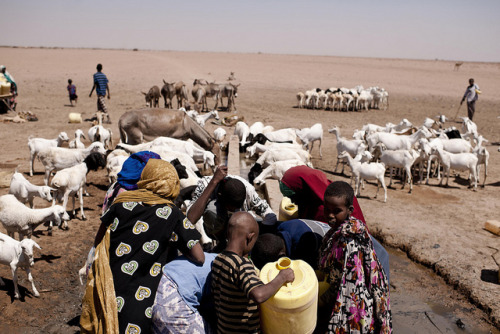 Villagers bringing animals to get water by IFRC on Flickr.Via Flickr: Drought in Kenya, Horn of Africa. In the Northeast region, the drought has lasted for the past four years — everything is bone dry, water holes have dried up and people must spend all their energy to get water.  Nomadic people living in northeastern Kenya have lost almost all their goats, cattle and camels as a result of the drought.  There is no grass or food for the animals, and water is sparse. The animals are vital for the people: without them, life becomes difficult, as they can no longer provide food.  In Hadado, people bring their animals to get a little water. They struggle to get their yellow cans filled with water. The city is located in an area that most resembles a desert, with constant small whilwinds blowing sand through the air. Photo: Jakob Dall - Danish Red Cross (p-KEN0529) Please visit www.ifrc.org for more information from the International Federation of Red Cross and Red Crescent Societies.