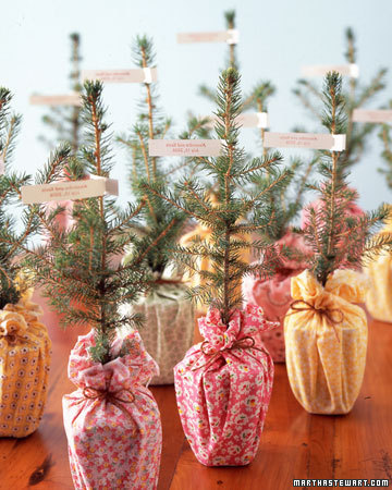 peace-love-design:  foot tall norway spruces symbolize love growing and becoming stronger with time… these could be even cuter than charlie browns christmas tree!