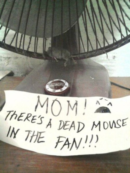 "collegehumor:   Note To Mom About Dead Mouse  ""If the cat doesn't eat him by the end of the day, we'll wait another day."" - Mom"