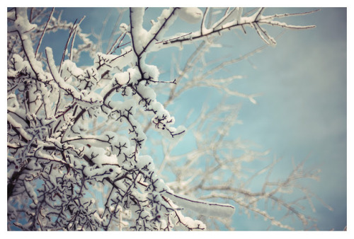 robot-heart:  (via Alicia Bock Photography: First Snow)