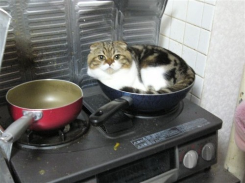 the-witch-baby:  cat what are you doing you are not food I do not want to cook you I do not want to eat you leave that skillet leave it cat leave while you still can