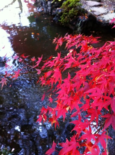 #redleaves #maple #leaves #water (Taken with picplz.)