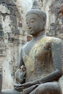 greenorgans:  Buddha and monkey, Thailand greenorgans:
