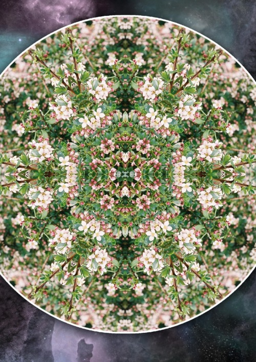 Mandala created from a photo ( guess which one :P)