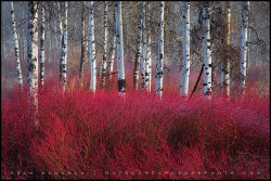 Red Willow Sea by Sean Bagshaw on Flickr.