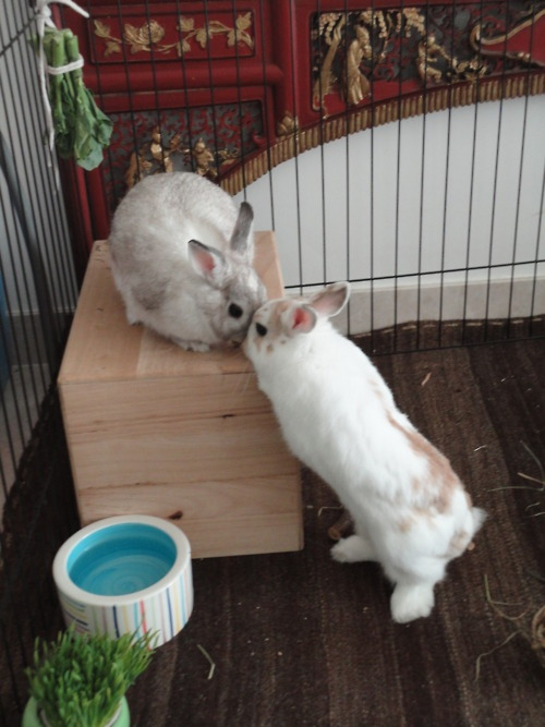 dailybunny:  Thanks, Pip!