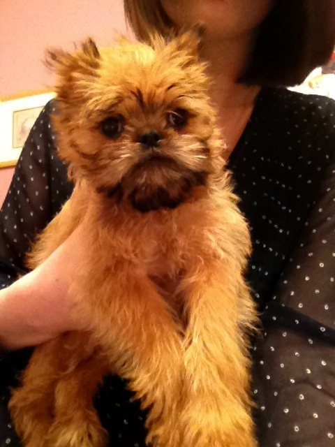 I asked for a puppy, they gave me an Ewok. No complaints.