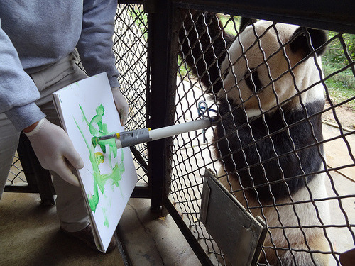Image description: Picasso or Panda? Giant panda Tian Tian gets his paws dirty with non-toxic water-based paint at the National Zoo. Painting is one among many activities that fall under Animal Enrichment—a program that provides physically and mentally stimulating activities and environments for the Zoo's residents. Art produced by many of the Zoo's mammal and bird residents will be available for purchase at the National Capital chapter of the American Association of Zoo Keepers (AAZK) Art Show, which will take place spring 2012. Photo by Smithsonian's National Zoo