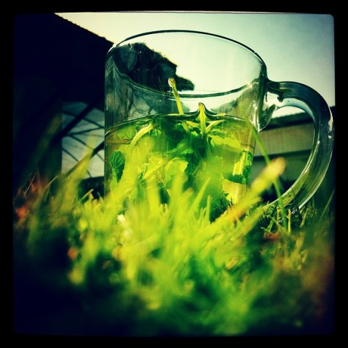 #picoftheday #iphone #instagram #tea #fresh #green #today #grass #mint (Taken with Instagram at Moshav Dekel)