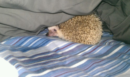 -wonderless:  Gus exploring my bed, the little tard peed everywhere Ahaha