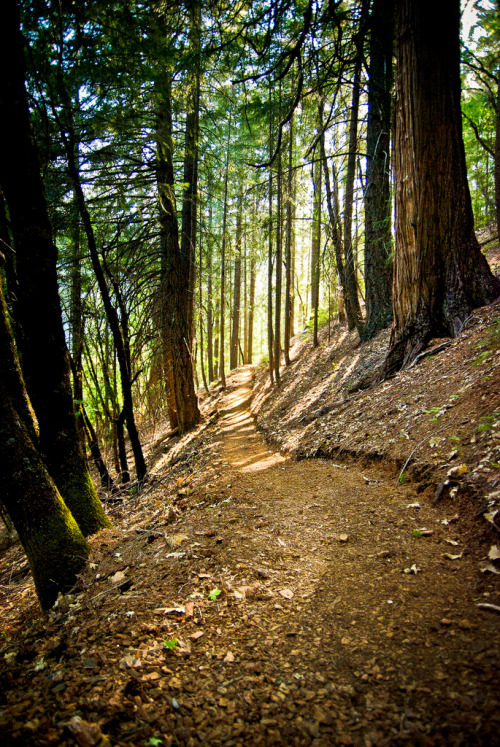 Perfect trail for our Blade-Max trail.  trailhikers:  Pacific Crest Trail