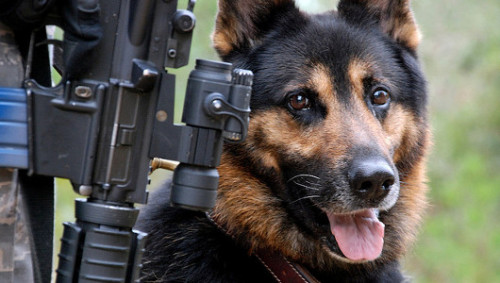 mothernaturenetwork:  Military dogs suffer from PTSDAfter combat and other dangerous situations, dogs can suffer emotional trauma just like soldiers.
