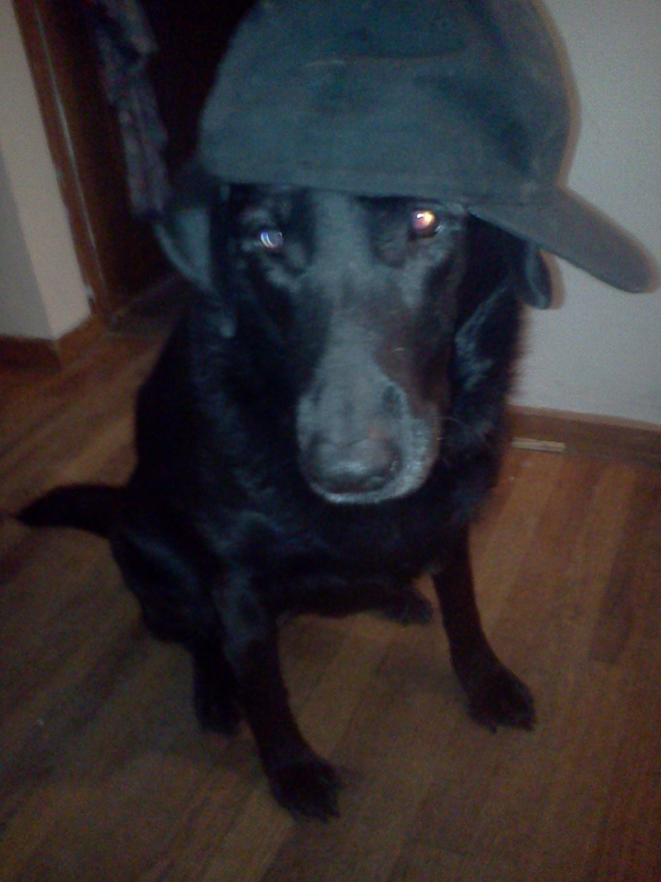 My dog is a G, you know;)))