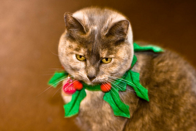 Storm's Christmas Wreath by pixieclipx on Flickr.