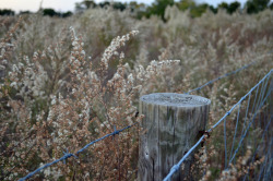 cbirdfly:  The Fence Line. Edge of the Levy Prairie. No fire here! November 29, 2011.