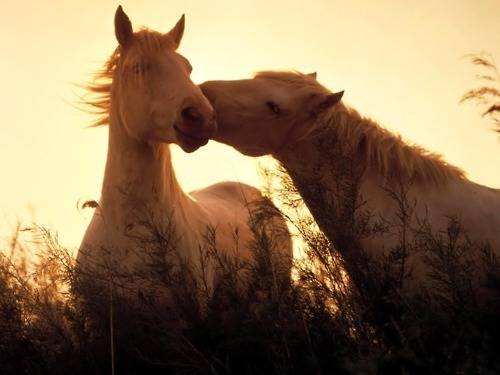 Without horses, there would be no happiness on earth.