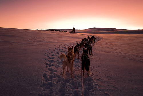 goneandwillreturn:  i wanna go dog-sleding before i die.