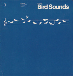 Guide to Bird Sounds (by Nathan Godding)
