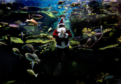 A diver dressed as Santa Claus greets spectators during an aquarium show  in Bangkok, Thailand. (Apichart Weerawong/Associated Press)