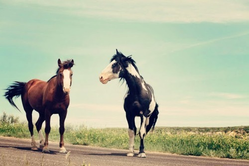 My horses are my friends, not my slaves.