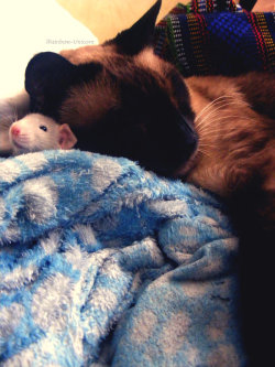 izkyoot:  cat and rat best friends user submitted, by irainbow-unicorn.deviantart.com