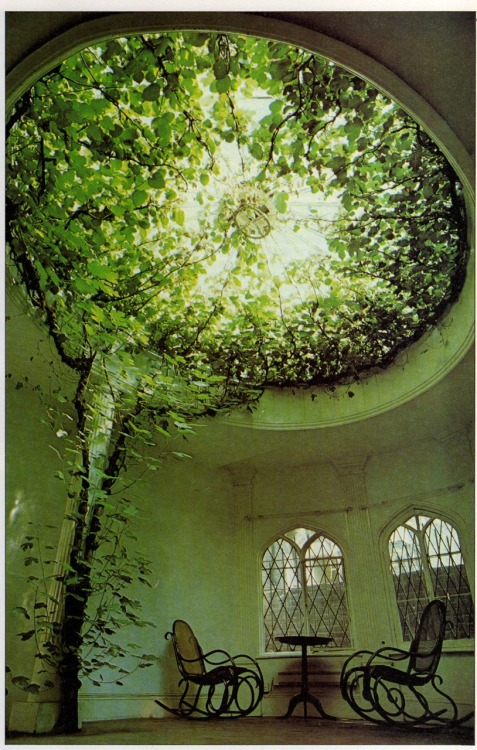 keziamari:  Ficus carica (the plants) makes a breathtaking display of aerial greenery filling the glass dome of what was once a chapel. Tradition has it that the dome was built round the tree. see how plants can be amazing…