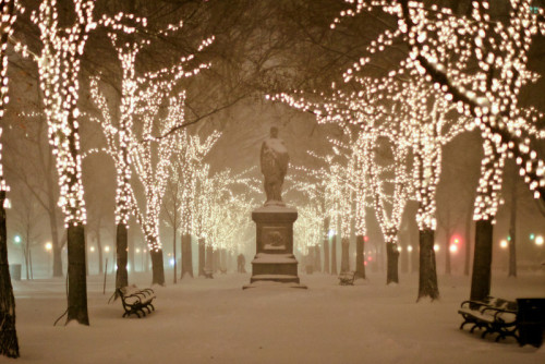 Christmas lights along Commonwealth Avenue in Boston, Massachusetts.