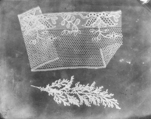 pnkpk:  William Henry Fox Talbot