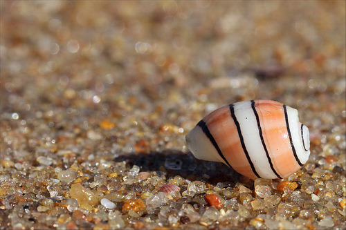 Sea Shell (by Esme Myburgh)