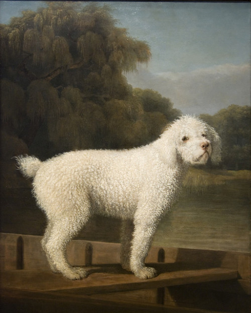 uncertaintimes:   George Stubbs, White Poodle in a Punt, ca. 1780 Maulleigh   Rates just behind Watson and the Shark as the work in the National Gallery that amuses me most. Because poodle. In a punt!
