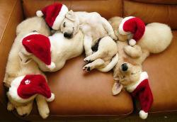 inside-the-head-of-me:  Christmas puppies(: