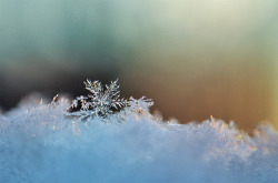 maxitendance:  Beauty of a Snowflake.