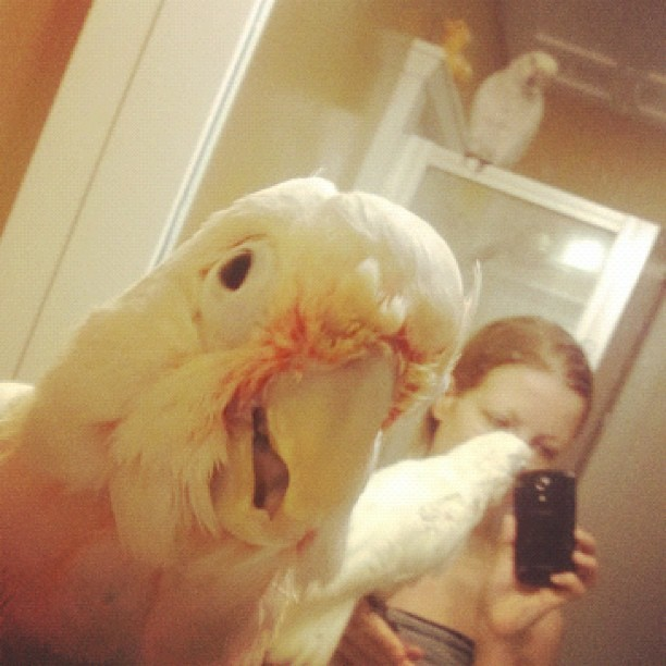 Three wet chicks #petsagram #cockatoos #wet #bird #shower (Taken with instagram)