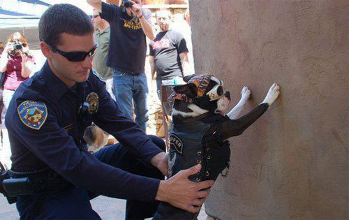 awwccupywallstreet:  Hell's Angel dog being being frisked at one of the Occupy protests.  (via)  From the amazing new Tumblr: Awwcupy Wall Street, The Occupy movement's cutest protesters.