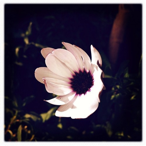 Monday flower. #iphoneography #iphonephotography #instagram #instamood #instagood #instadaily #instalovely #instagramhub #mextagram #mexigers #igersmx #igersmexico #igers #iglovers #nature #knowingtheworldthroughnature #flower #flowers #color  (Taken with instagram)
