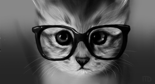 cute-kitty-cats:  cat in glasses