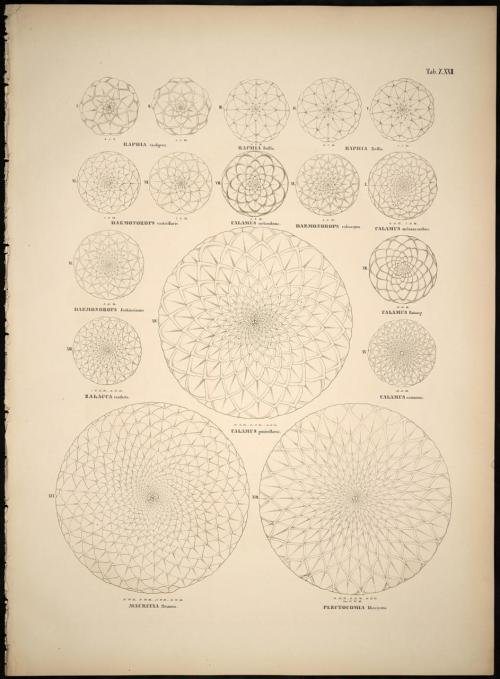 the-rx:   Palm symmetry (via bibliodyssey).