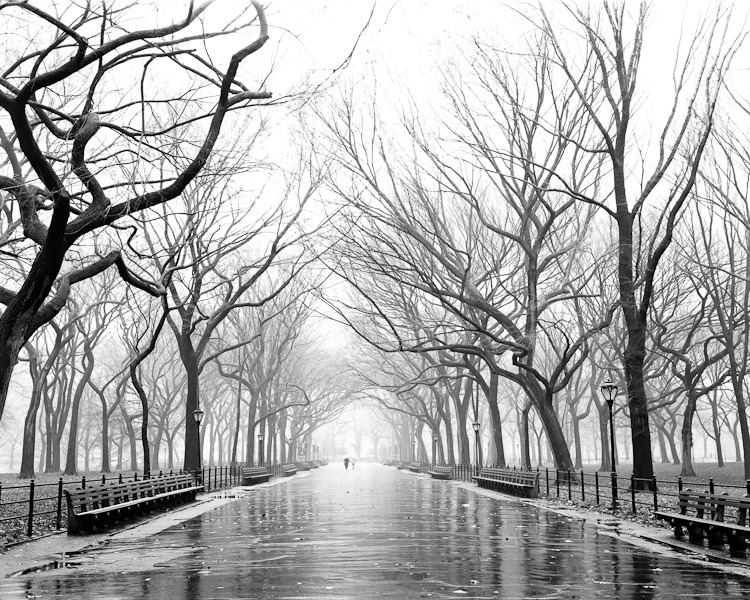 liquidnight:  Dave Beckerman Poets Walk Central Park