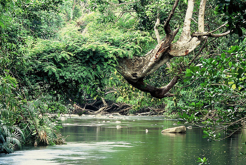 vintagemintage:  Rainforest Creek, The Daintree (by wildphotos4u)