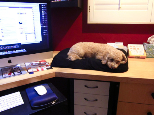Chowder likes to sleep on my desk sometimes. I like it too. :)