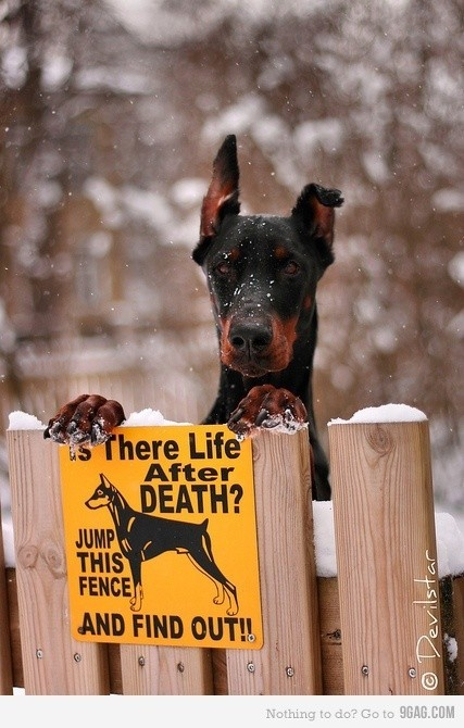 This dog. I want it. Now… The sign would be nice too.