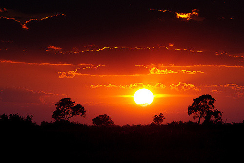 llbwwb:  Great African Sunrise (by Wild Dogger)
