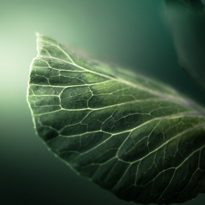 Leaf Nature by ►CubaGallery on Flickr. leaf