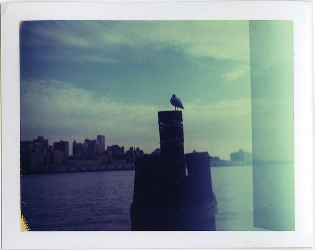 City Bird /// East River /// New York City, NY /// October 2009